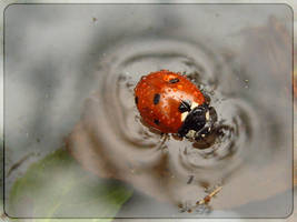 a to be rescued drowning bug by webcruiser