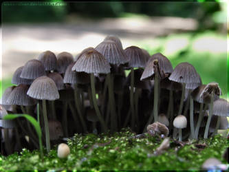 mushrooms XLVIII by webcruiser