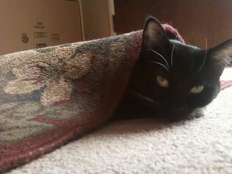 Carpet Burrito by Naivax-Maundrell