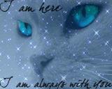 I am always with you... by xBramblestarx