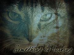Tigerstar's Lurking... by xBramblestarx