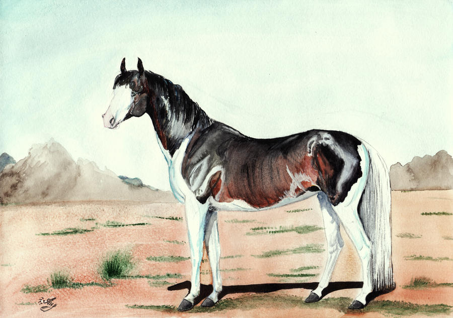 Pinto Horse Pictures Pinto Horse by a Nya95
