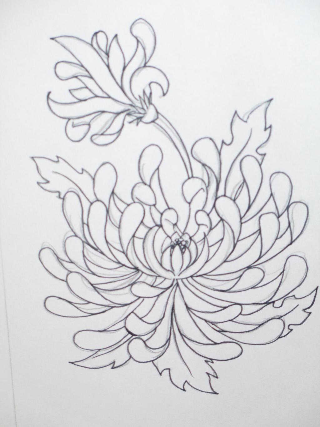 Chrysanthemum Flower Line Drawing : Chrysanthemum line art by melmo on deviantart