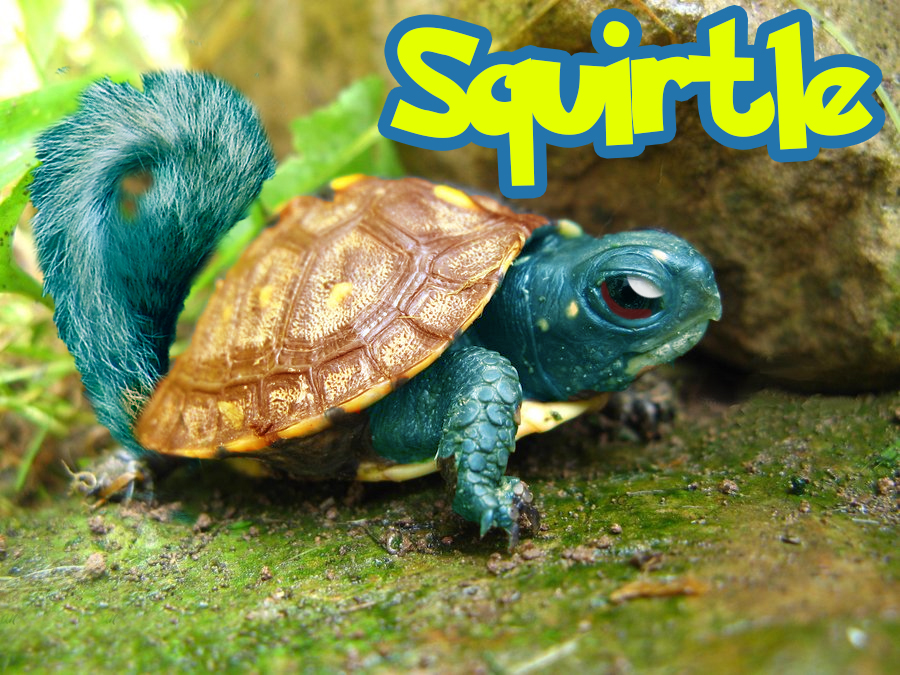 real squirtle by kezrocks11 on DeviantArt