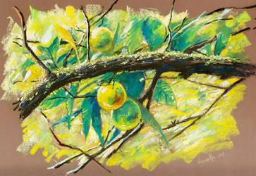 Lemons in Salazie by Vassantha