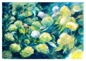 Hydrangeas by Vassantha