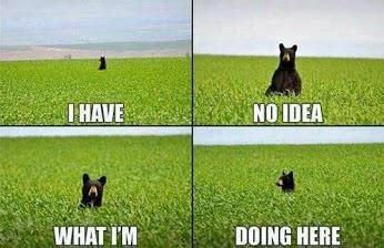 I have no idea..