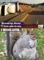 Nuts Spilled