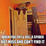 When a spider disappeares