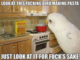 Bird Making Pasta by cosenza987