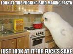 Bird Making Pasta