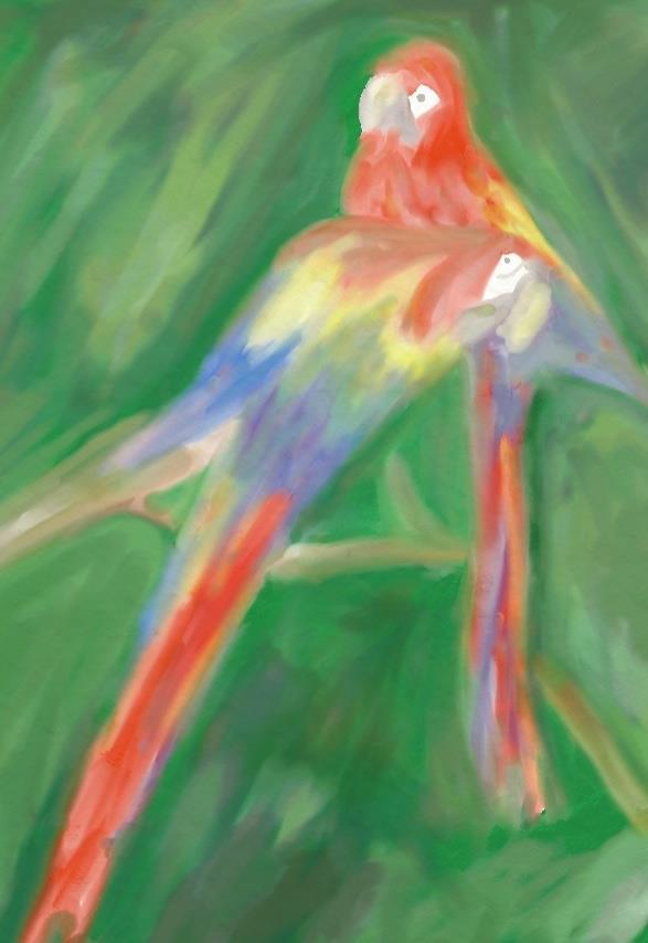 Parrots by majykwolfe