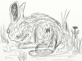 Rabbit by majykwolfe