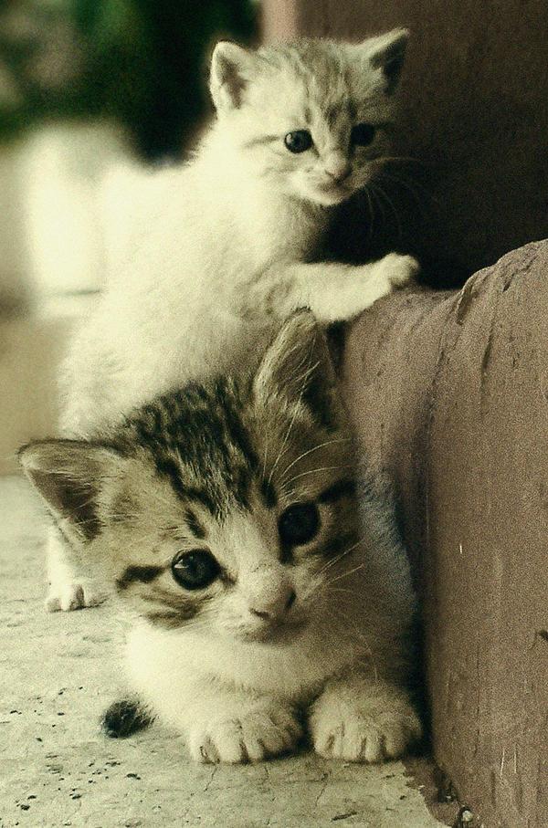 Kittens by schmoo15