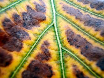 alisonleigh leaf 2 by ag-photography
