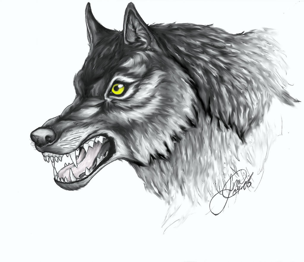 Grey Wolf.1 by LoopGaroux