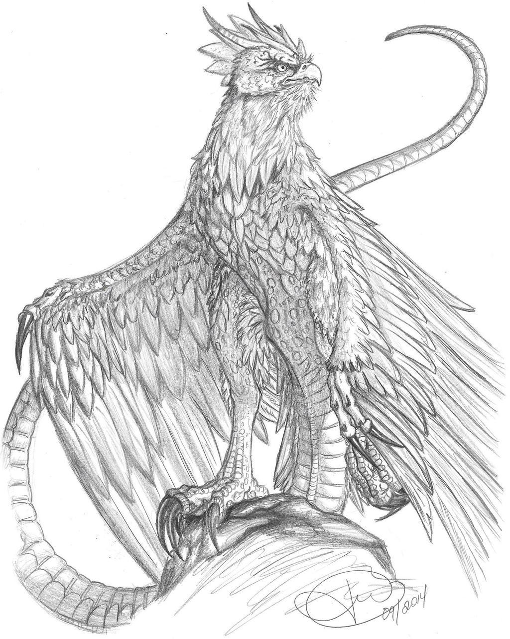 Cockatrice sketch by LoopGaroux