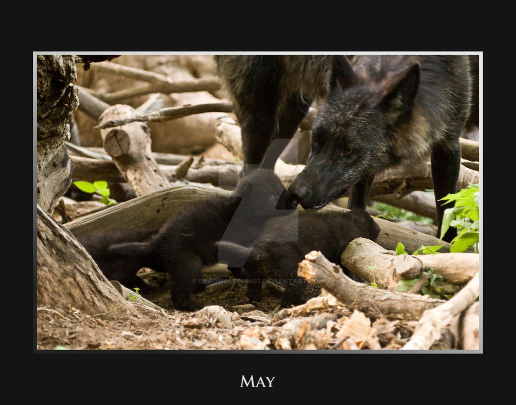 May by deadwolf140407