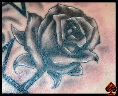 Rose by DarkArtsColective