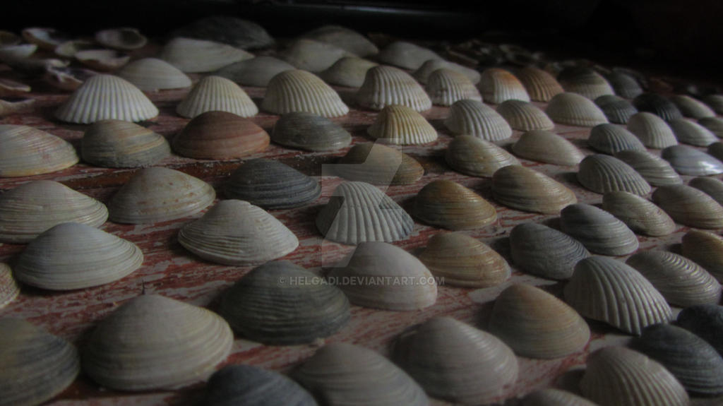Seashells by HelgaDi