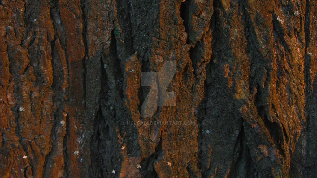 Oak bark by HelgaDi