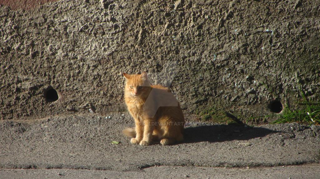 Waiting kitten by HelgaDi