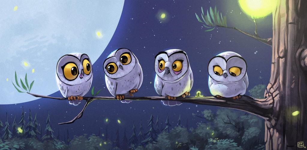 Owls by bib0un