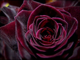 DarkDarkRed by Maderia