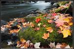 Fall at  Brook Falls