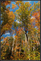 Colors of September by IgorLaptev