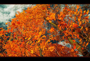 Memories of the Fall's Bloom by IgorLaptev