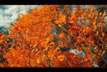 Memories of the Fall's Bloom