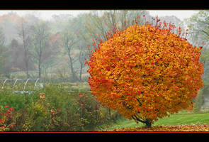 Somewhere in October by IgorLaptev