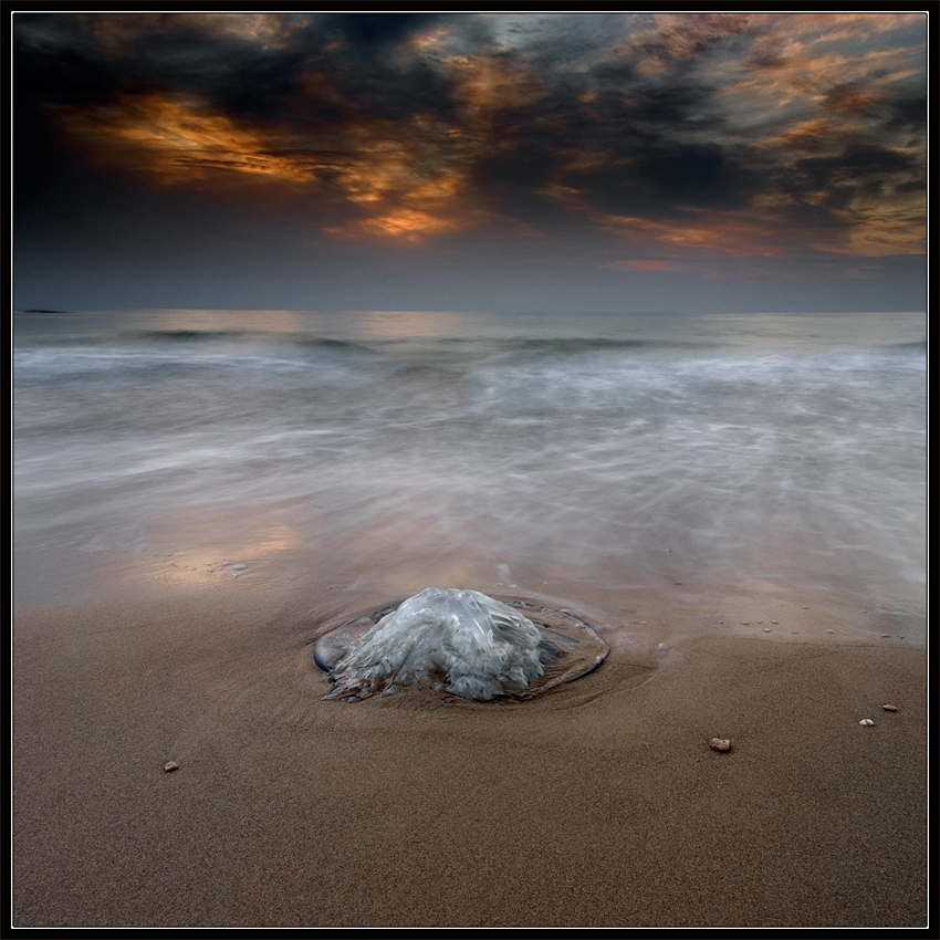 In Memory of Jellyfish by IgorLaptev