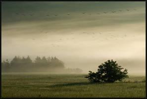 Morning Flight by IgorLaptev