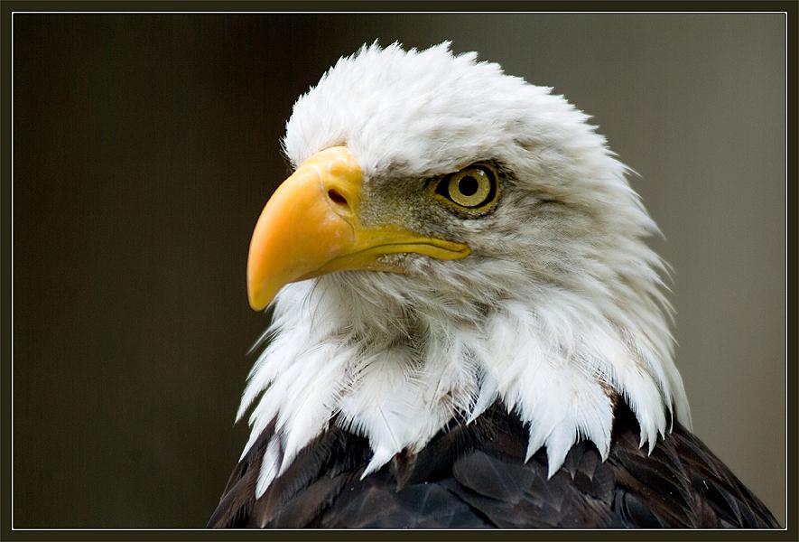 The Portrait of the Proud Bird by IgorLaptev