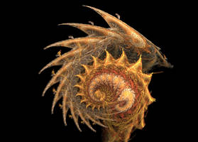 Cosmic Shrimp