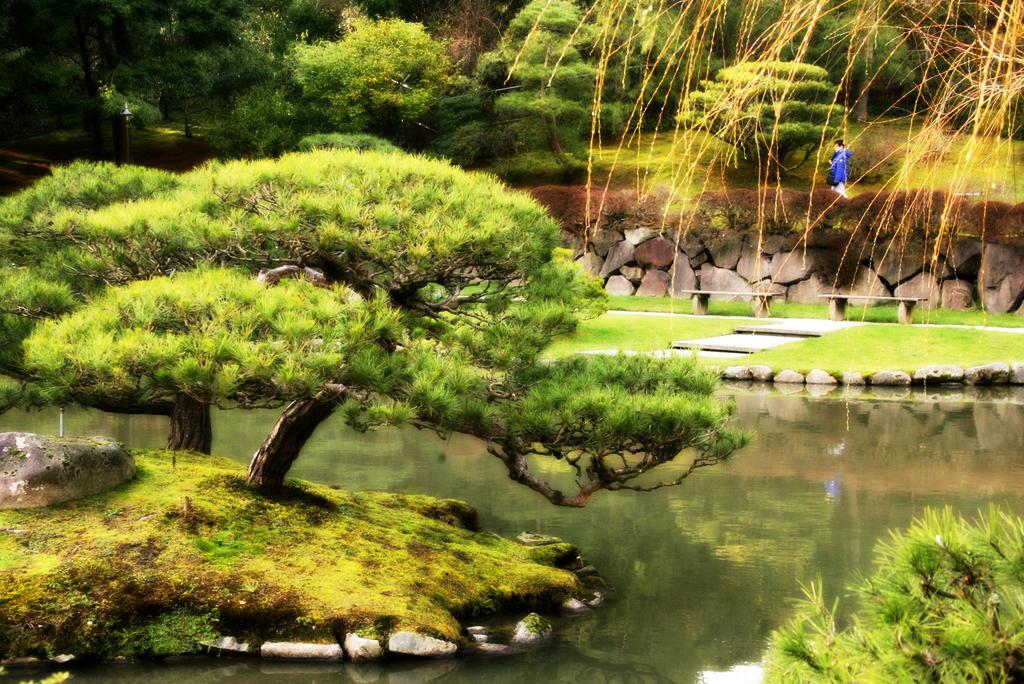 Japanese garden bonsai tree seattle by happi anne on for Garden design reddit