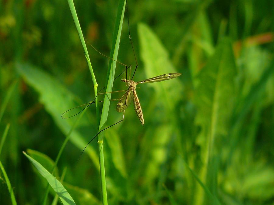 in grass by lumixdmc850