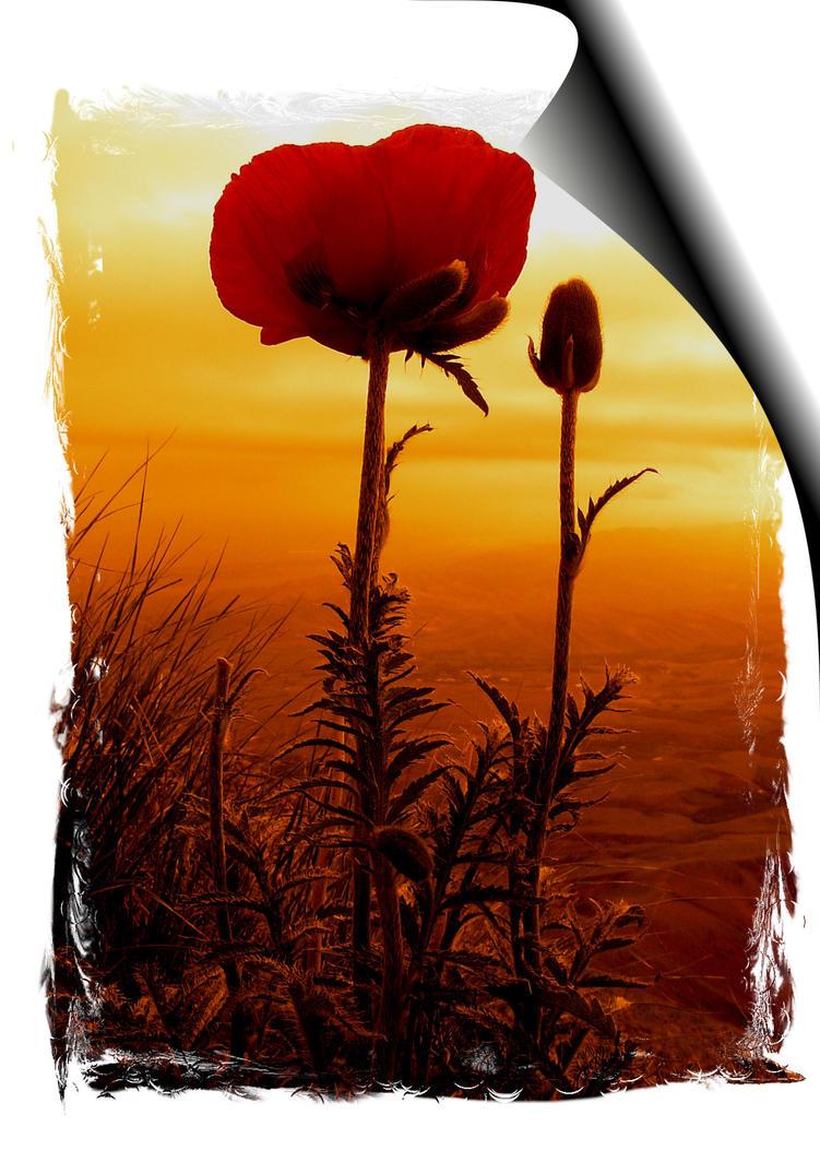 Dream Flower by K1-Immortal