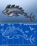 Strog Barracuda shark