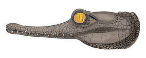 Slender Snouted Croc by MechanicalFirefly