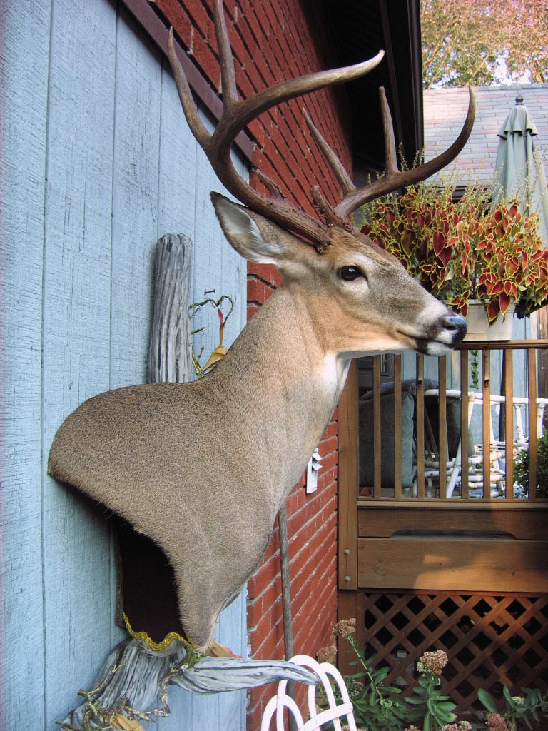 Wall Pedestal Buck by MovingSkin13