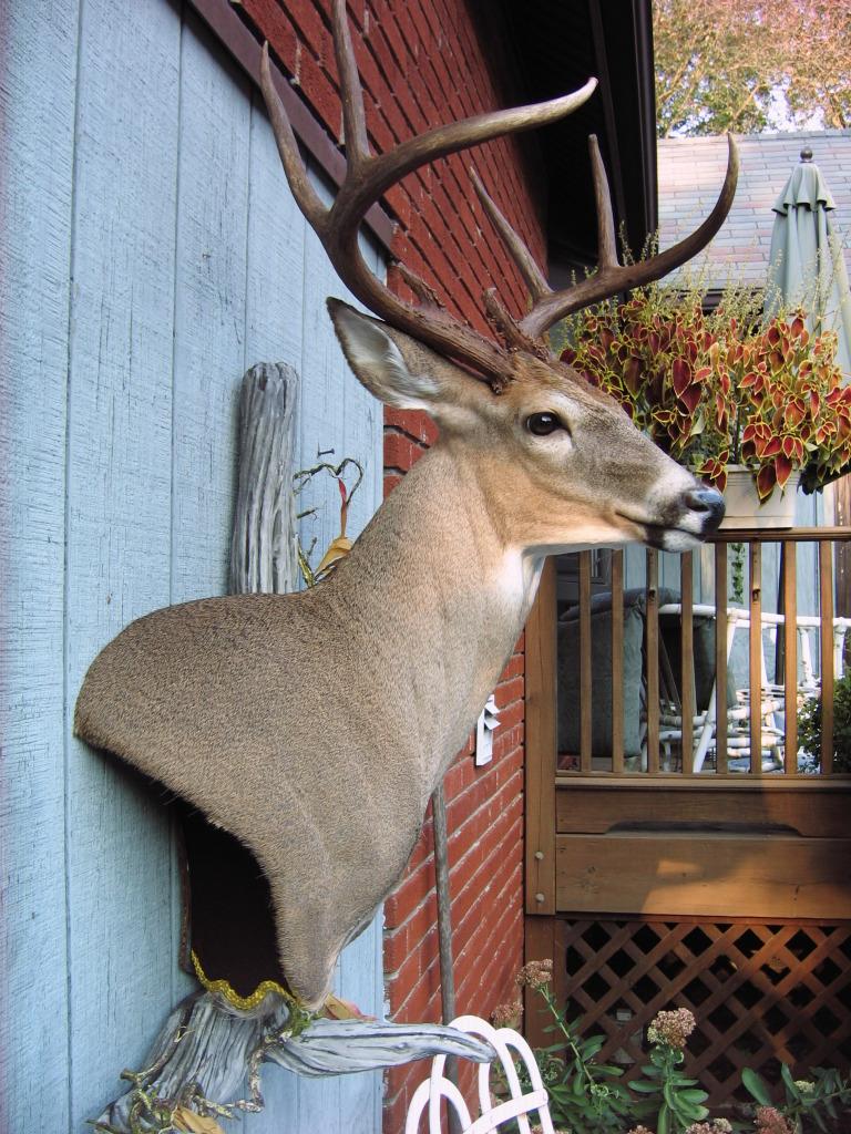 Wall Pedestal Buck by MovingSkin13