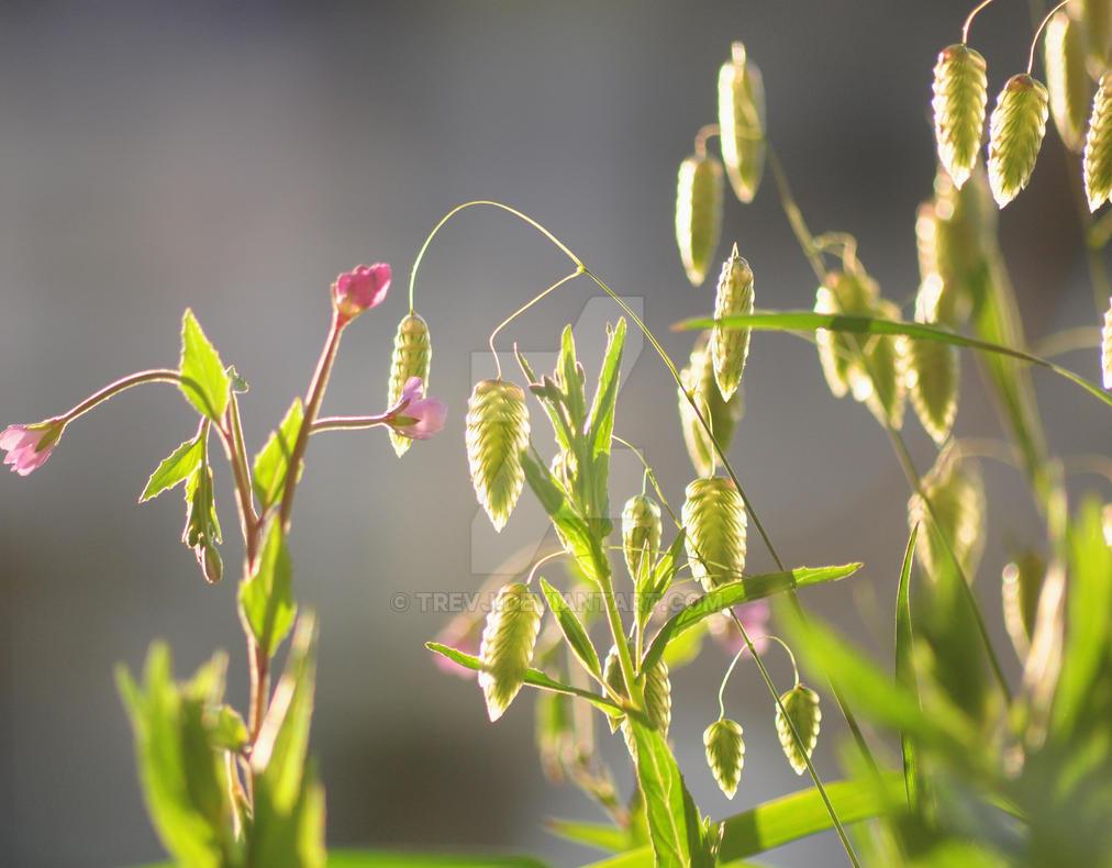 QUAKING GRASSES by trevj