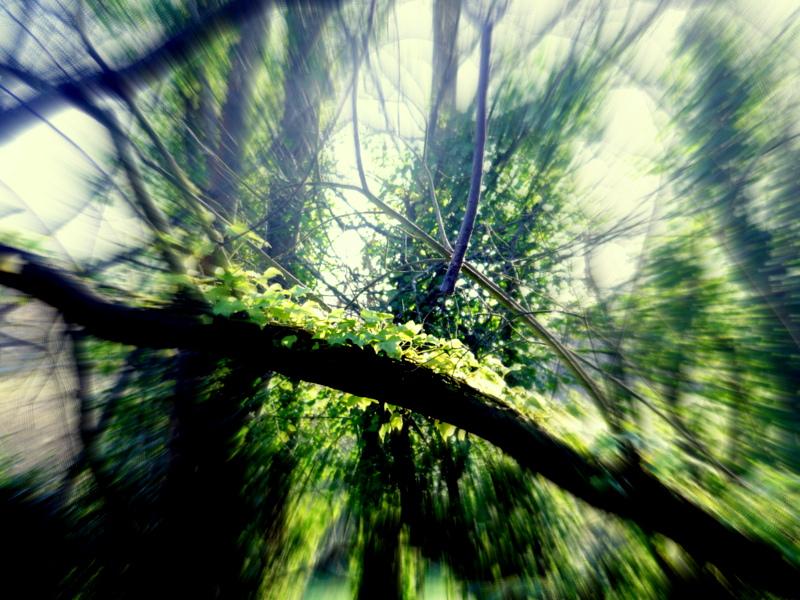 GREEN DREAM by trevj
