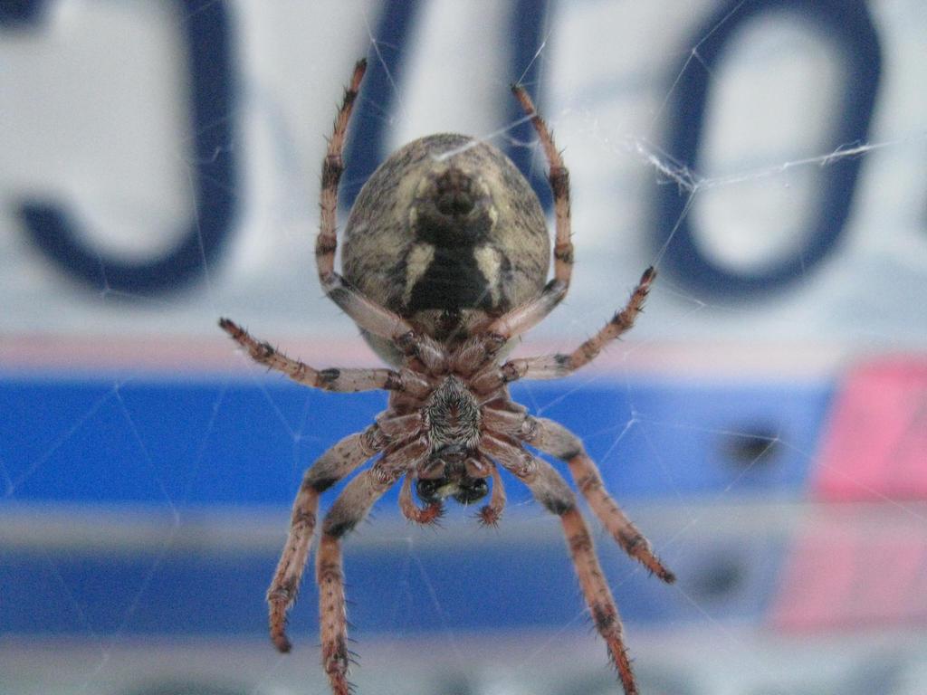 Spider by CassieBugg