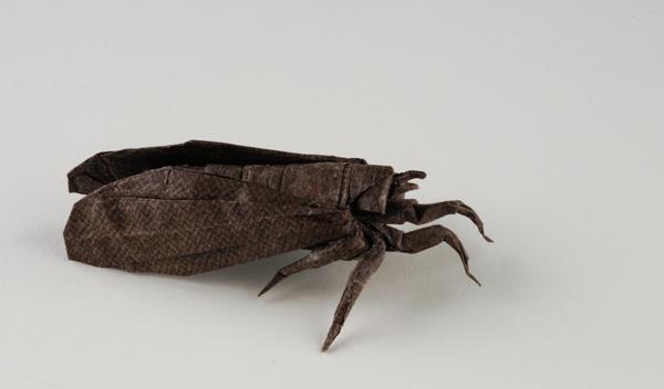 Shizuoka Cicada 2 by Dreams-Made-Flesh