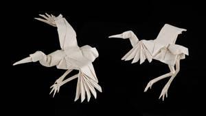 Dancing Crane by Dreams-Made-Flesh