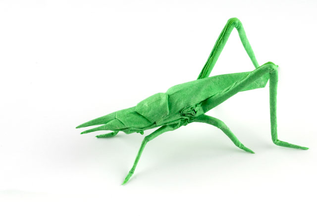 Longheaded Locust by Dreams-Made-Flesh